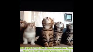 Funny Cats - Best Funny Cat Videos Ever - Funny Kitty Cat Vines Compilation №62 - Video