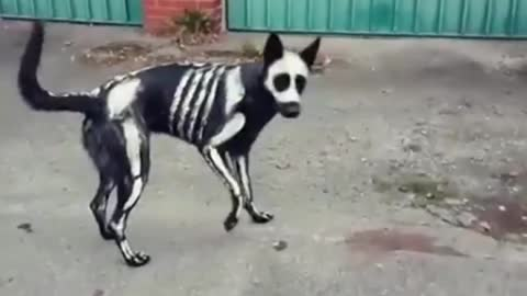 Skeleton Dog Shows Off An Awesome Halloween Costume