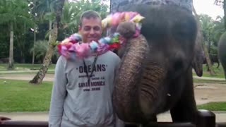 Elephant show in Bali - Video