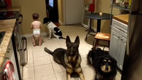 Cute Toddler Helps Feed Three Obedient Dogs