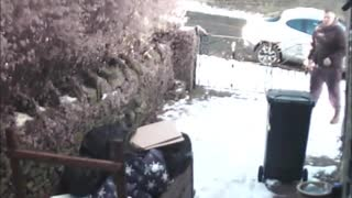 Thief stealing from yard greeted by Bull Mastiff - Video