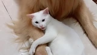 A strong friendship between dog and cat