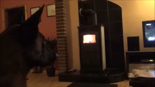 Dog likes watching television  - Video