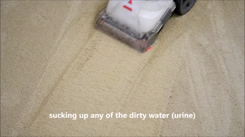 Bissell PowerForce® PowerBrush Upright Carpet Cleaner 76R9W Review Real World Test