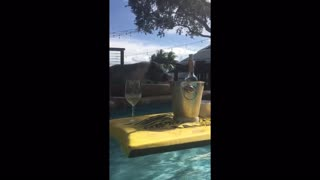 Ginger the Mini Pig falls in the pool - Video