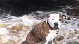Mountain  dog  - Video
