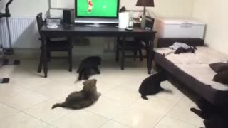 Sweet little dogs are watching tv - Video