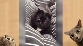 Cute Cats And Dogs Compilation