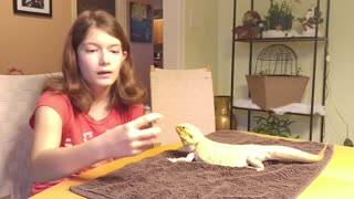 How to clip a Bearded Dragon's nails - Video