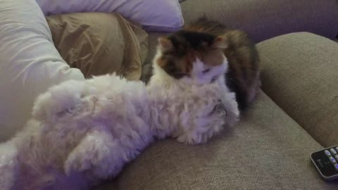 Cat gives dog best friend a much needed bath