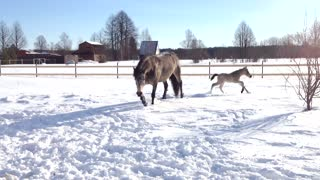 little foal  - Video