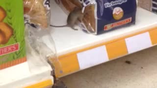 Mouse Eating Bread In A Supermarket - Video