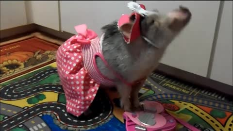 Pig plays folk music on children's guitar