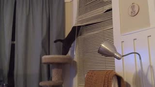 Cat has issues with window shades - Video