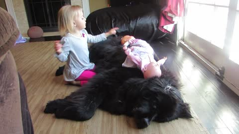 Relaxed dog entertains toddler