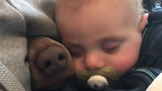 """Nosy"" dog joins baby for nap time"