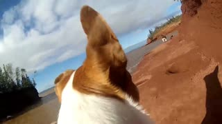 Resuced from a Kill Shelter. Farley the Dog today with a GoPro on - Video