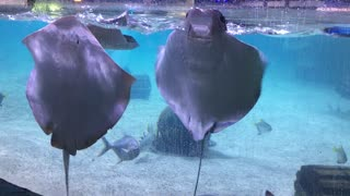 Kids with Sting Rays