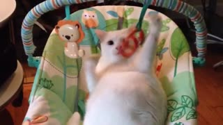 Cat enjoys baby swing way more than actual baby - Video