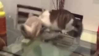 wrestling cats - Video
