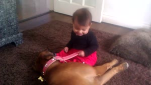 Boxer dog shows adorable baby who is boss - Video