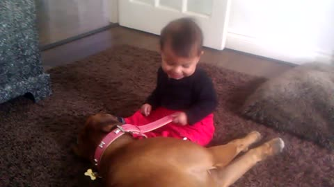 Boxer dog shows adorable baby who is boss