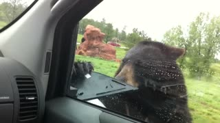 Curious Black Bear Vandalizes Car With Terrified Family Inside - Video