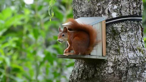 cute and funny squirrel eating nuts