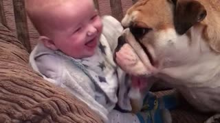 Gentle Bulldog Makes Baby Boy Laugh - Video