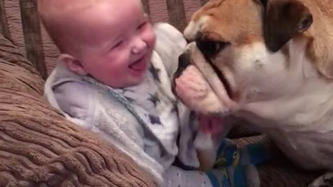 Gentle Bulldog Makes Baby Boy Laugh