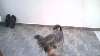 dog style - Video