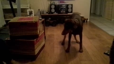 Imitating Her Young Owner Is This Dog's Favorite Game