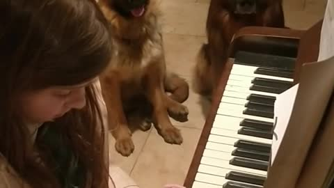 Little girl play piano for her dogs