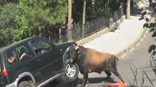 Bull Destroys 4x4 - Video