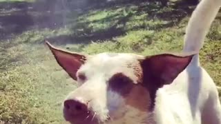 Slow motion water hose dog - Video