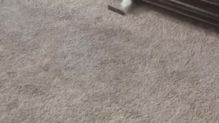 Cat reaches out under cabinet for treat - Video