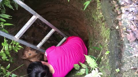 Dog Trapped In Hole For 3 Days Cries Tears Of Joy When Rescuers Finally Free Him