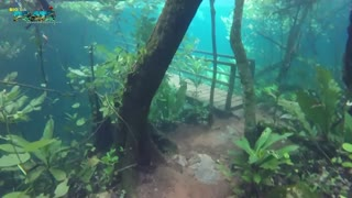 Heavy Flooding Creates Spectacular Underwater Forest