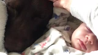 Precious moment captured between dog and baby