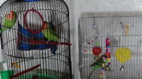 Very good parrots are friends with each other.