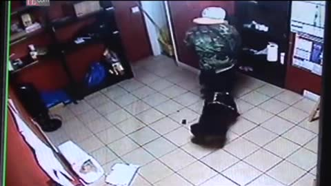 Rottweiler helps owner to disarm robber of a Jewelry Store !