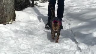 My cat likes to walk on snow - Video