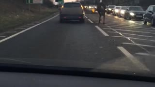 Just Walking a Horse on the Highway - Video