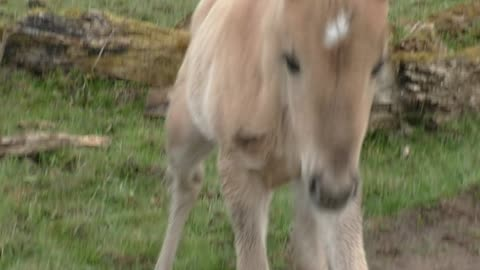 Happy wild foal jumps for joy in glorious slow motion