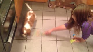 Puppy goes psycho after first treat and POOPS at the end! - Video