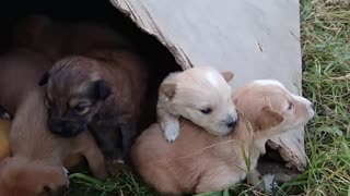Cute puppies will melt your heart - Video