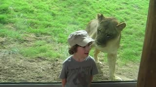 12 Crazy Real Life Jungle Book Moments - Video