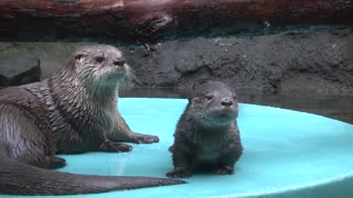 A Tale of 2 Otters
