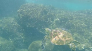 Snorkeling with a sea turtle by my side!  - Video