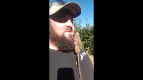 Bird Mistakes Man's Beard For New Nest